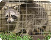 Duval County Animal Control Services Florida FL